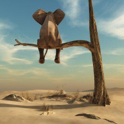 Obraz Słoń stoi na cienkiej gałęzi uschniętych drzew