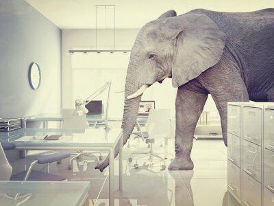 Obraz Słoń w pokoju