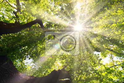 Słońce świeci przez liście wiosną