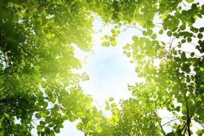 Słońce w głębokim lesie