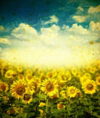 Obraz słoneczniki na tle grunge