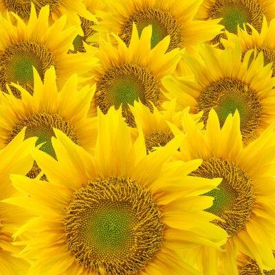 Obraz słonecznikowy