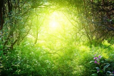 słoneczny dzień w głębokim lesie