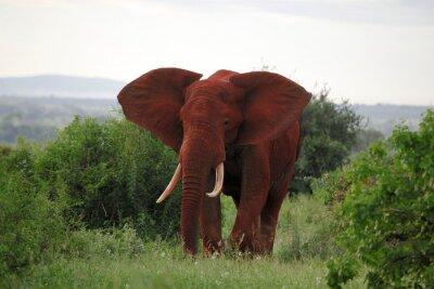 Obraz słoni w Parku Narodowym Tsavo East