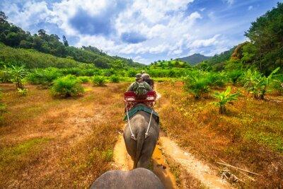Obraz Słoniach w Tajlandii