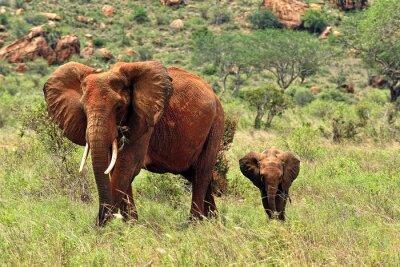 Obraz Słonie