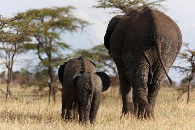 Obraz Słonie odejść