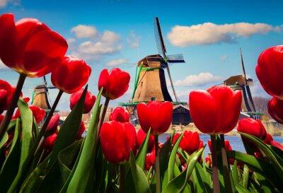 Obraz Słynne holenderskie wiatraki