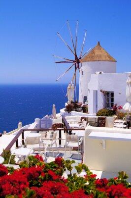 Obraz Słynny wiatrak z Santorini, Grecja z czerwonymi kwiatami