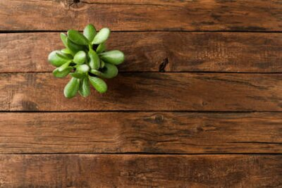 Obraz Small green plant on vintage wooden table with copyspace. Top view