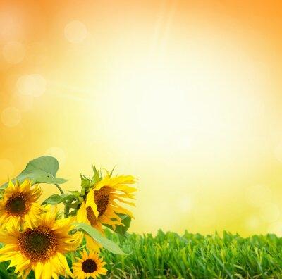 Obraz Sonnenblume