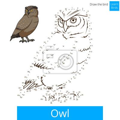 Obraz Sowa ptaka nauczyć się rysować wektor
