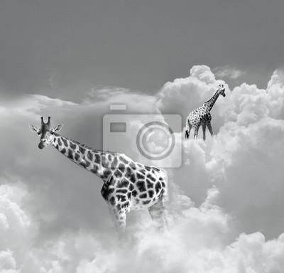 Obraz Spacery w chmurach