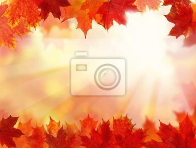 Obraz Spadek tle z jesienią liści klonu