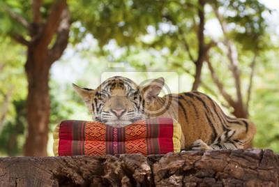 spanie tygrysa