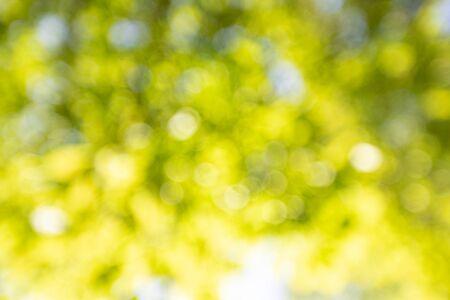 Obraz Spring background, green leaves on blurred background