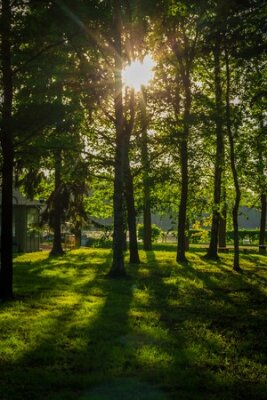 Obraz Spring evening park. City Park. Russian green park. Silence in the city park.