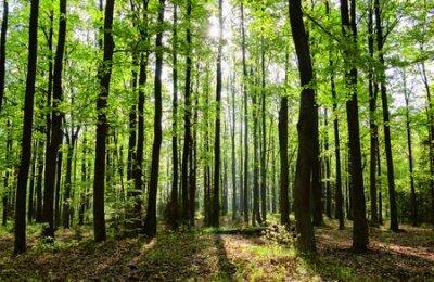 Obraz Spring forest