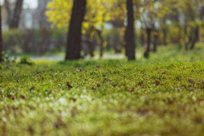 Obraz Spring green grass park background