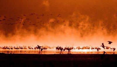 stada flamingów w wschodzie słońca, Lake Nakuru, Kenia