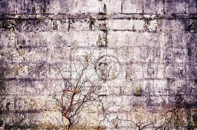 Stara betonowa grunge ściana z wysuszonymi roślinami, rocznika kolor tonował abstrakcjonistyczną teksturę lub tło.