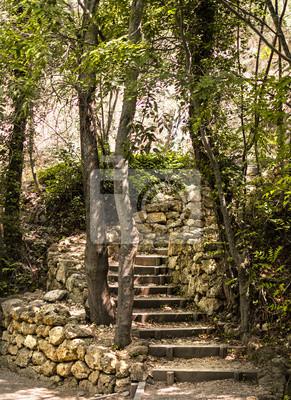 Stare kamienne schody w lesie