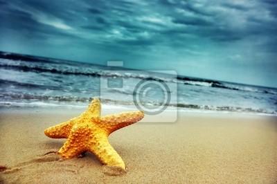 Starfish na tropikalnej plaży