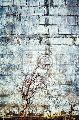 Stary betonowy grunge ściany tło lub tekstura, kolor stonowany obrazek.