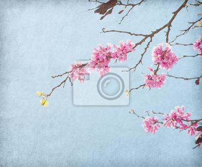 stary papier z wizerunkiem kwitnących gałęzi. Cercis siliquastrum