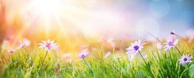Obraz Stokrotki Na Polu - Streszczenie Wiosny Krajobraz