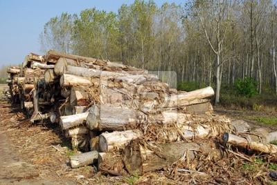 stos drewna w lesie