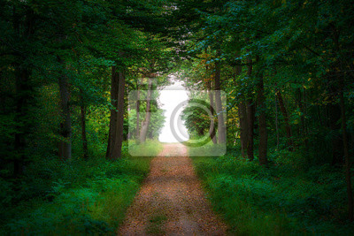 Obraz Straight path leading into a forest clearing formed as a keyhole