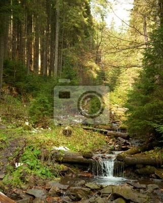 Stream Woodland. Szybki strumień płynący przez lasy.