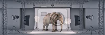 Obraz studio fotograficzne ze słoniem. Renderowania 3d