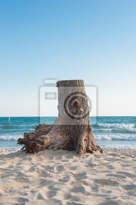 Stump z tle morza.