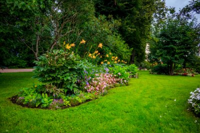 Obraz Summer green park. Grass, foliage, trees. Bright park. Summer Park Background