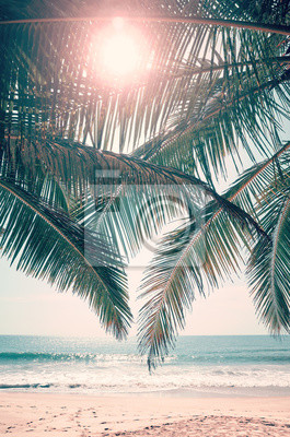 Sun shines through palm leaves, retro color toned picture.