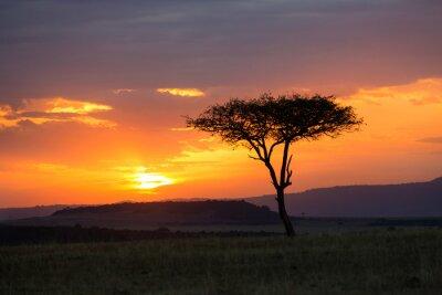 Obraz Sunset in the Serengeti National Park, Tanzania, Africa