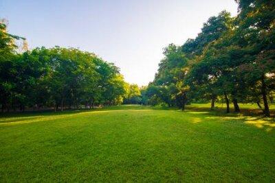 Obraz Sunset park green lawn with tree city public park