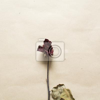 Obraz Suszone płatki na brązowym tle