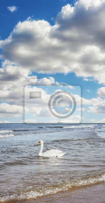 Swan na wodzie i prom w odległości podróży, wakacje koncepcji, selektywne fokus.