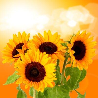 Obraz Świeże kwiaty