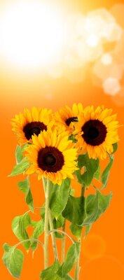 Obraz świeże kwiaty, słońce,