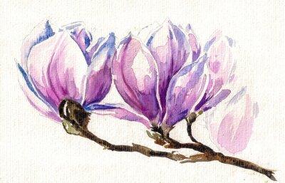 Obraz Świeże, różowy, wiosna magnolia drzewa kwiaty