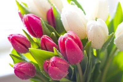 Obraz Świeże tulipany
