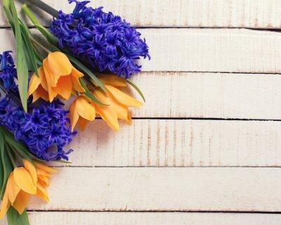 Obraz Świeże wiosenne tulipany żółte i niebieskie hiacynty kwiaty