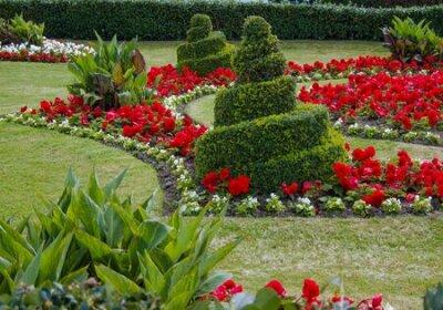 Obraz Swirls Topiary In Garden