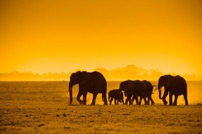 sylwetki słoni