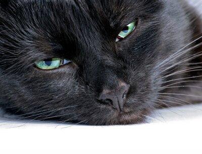 Obraz Szef czarnego kota leżącego na białym tle