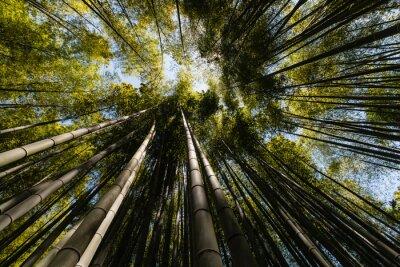 Obraz szeroki kąt widzenia bambusowym lesie